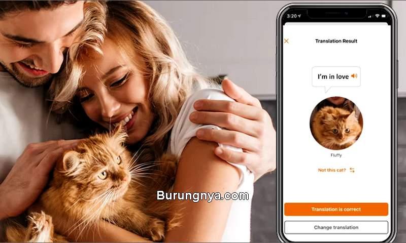 Aplikasi untuk menerjemahkan suara kucing (meowtalk.app)