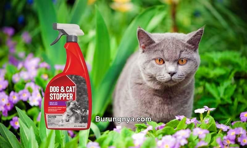 Cairan Pengusir Kucing (menards.com)