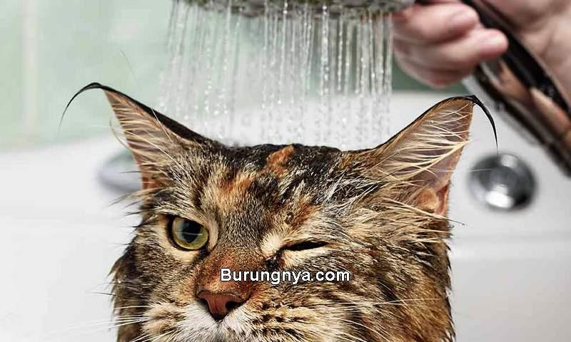 Cara Memandikan Kucing (thehappycatsite.com)
