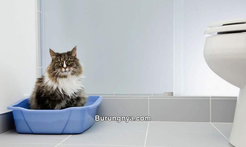 Cara Mengobati Kucing Diare Tanpa ke Dokter (thesprucepets.com)