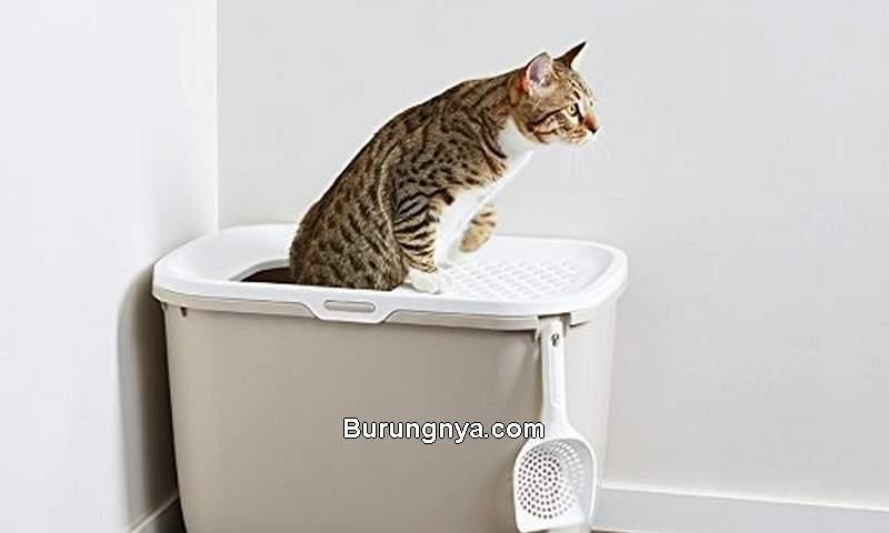Cara Merawat Kucing Diare (buzzfeed.com)