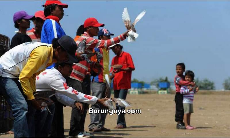Jadwal Latihan Merpati Balap Legendaris (koranmadura.com)