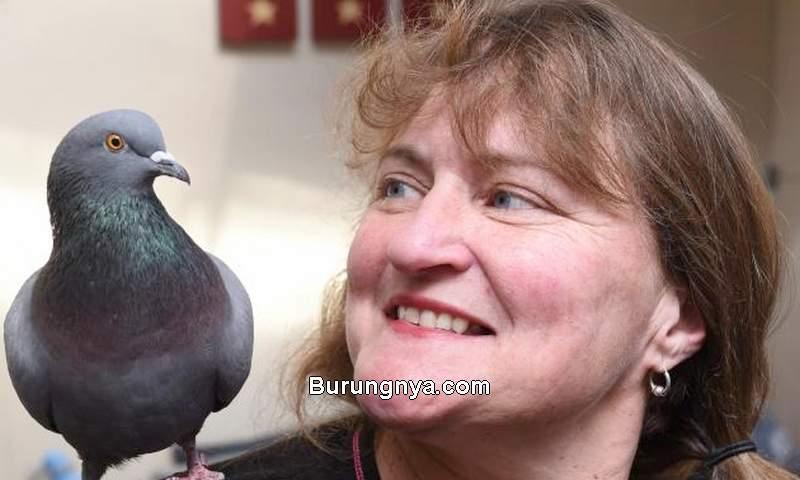 Kelebihan Burung Merpati dan Faktanya (odt.co)