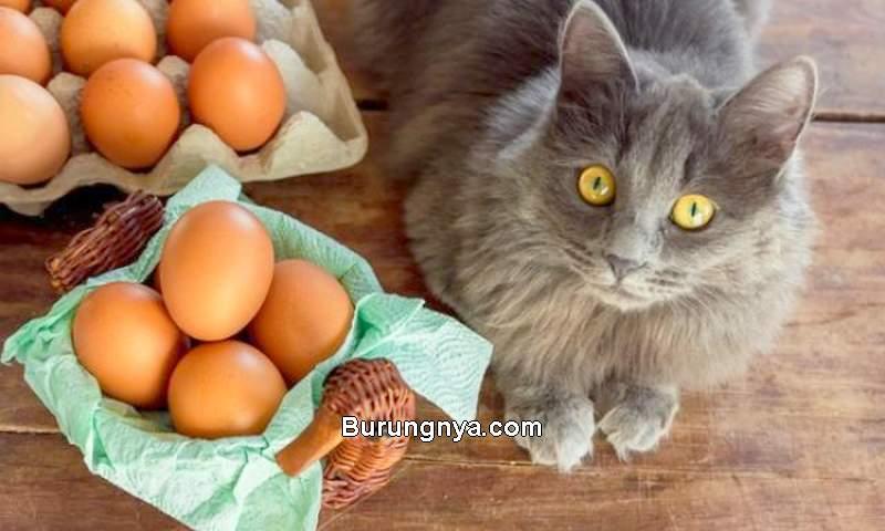 Makanan Kucing dari Telur (petmd.com)