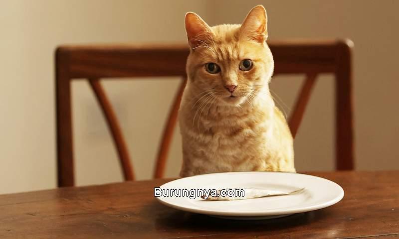 Makanan Manusia untuk Kucing (webmd.com)