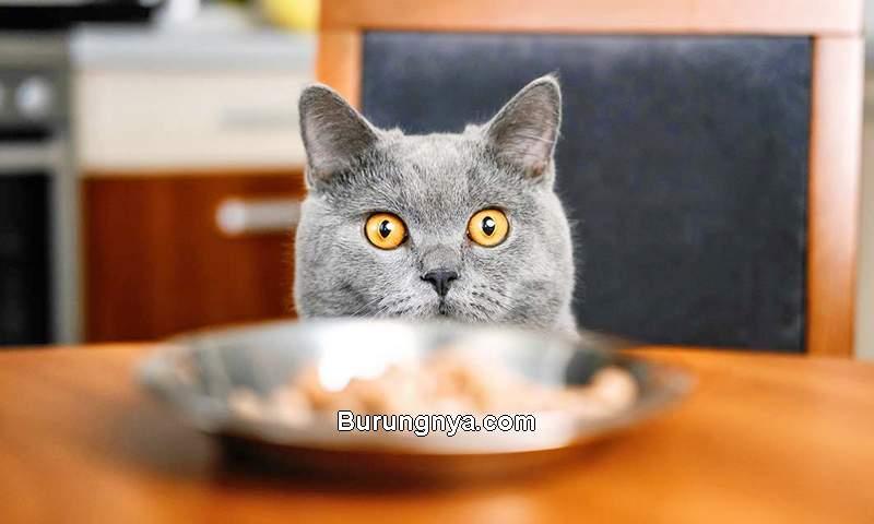 Makanan Manusia yang Boleh Dimakan Kucing (thehappycatsite.com)