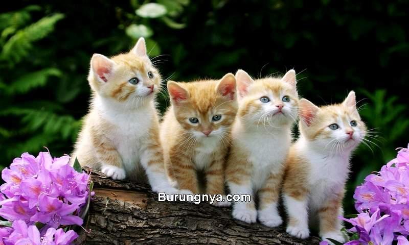 Nama Kucing Islami dan Artinya (hdfreewallpaper.net)