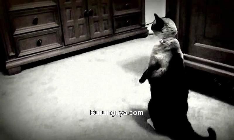 Apakah Kucing Bisa Lihat Hantu (catster.com)
