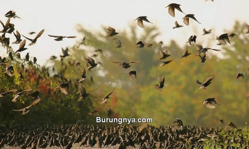 Cara Menghitung Jumlah Burung di Seluruh Dunia (discovermagazine.com)