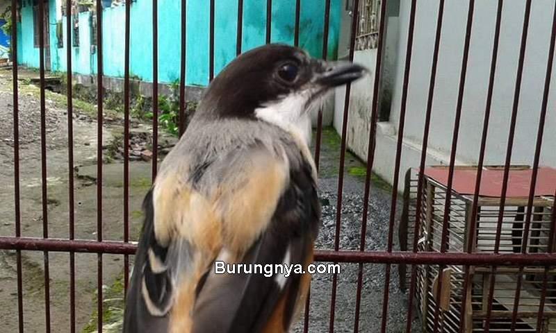 Cendet Mabung (ozankicaumania.com)