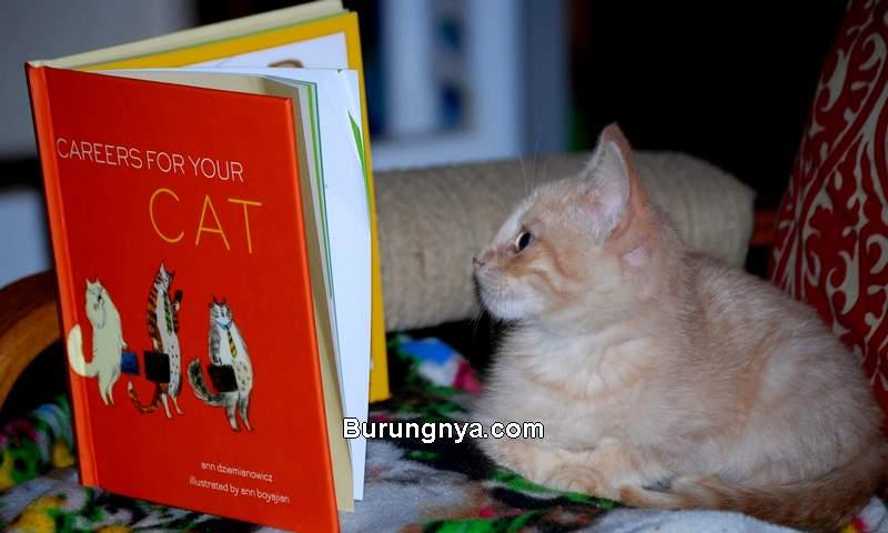 Jenis Kucing Cerdas (anndzieminanowics.com)