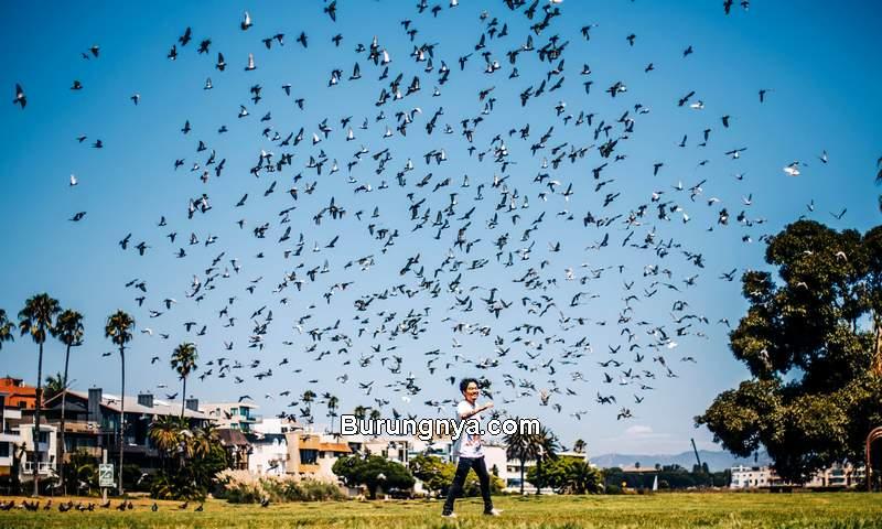 Jumlah Burung Liar di Dunia (reddit.com)