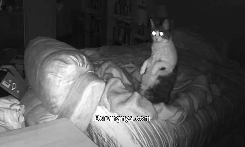 Kucing Bisa Melihat Hantu (rare.us)