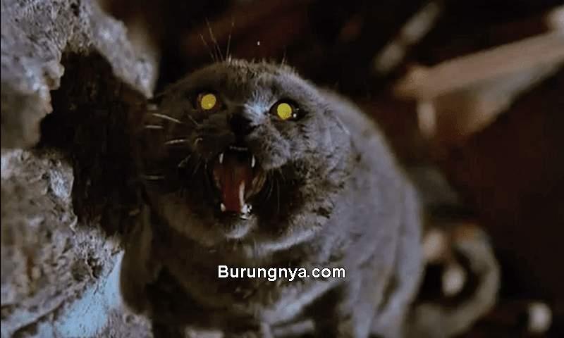 Kucing Lihat Hantu (treehugger.com)