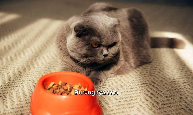 Kucing Pilih-pilih Makanan (pet-happy.com)
