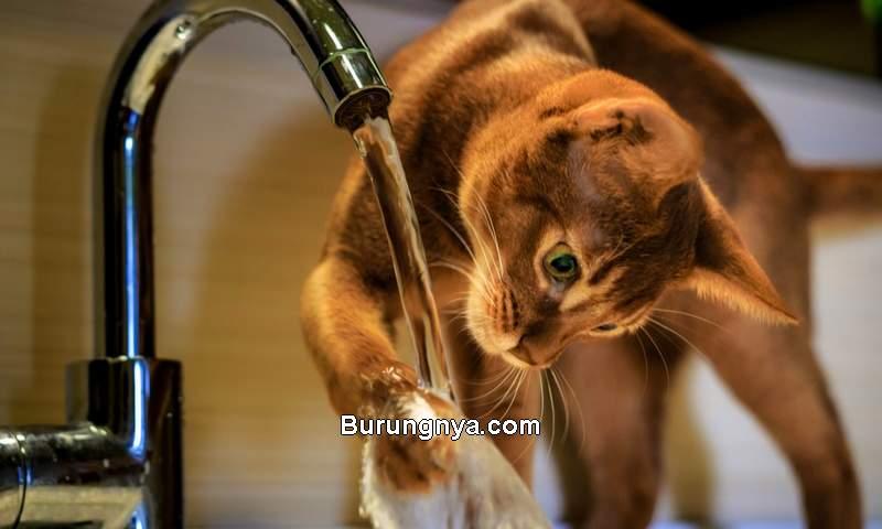Kucing Pintar di Dunia (a-z-animals.com)