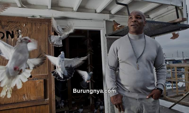 Mike Tyson dan Burung Merpati (sbsun.com)