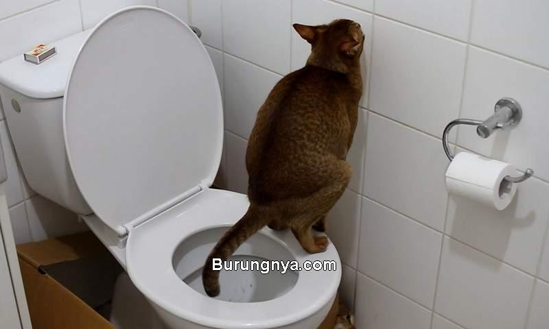 Agar Kucing Tidak Buang Kotoran Sembarangan (youtube.com)