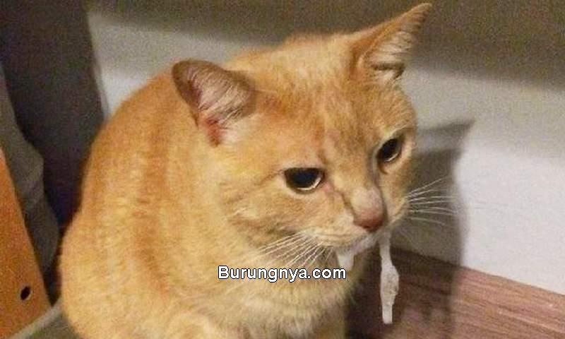 Air Liur Kucing Keluar Terus Bau Busuk (pinterest.com)