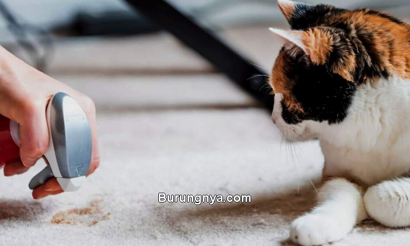 Cara Mencegah Kucing Buang Kotoran Sembarangan (wamiz.co.uk)