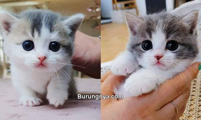 Kucing Lucu Imut dan Sehat (tumblr.com)