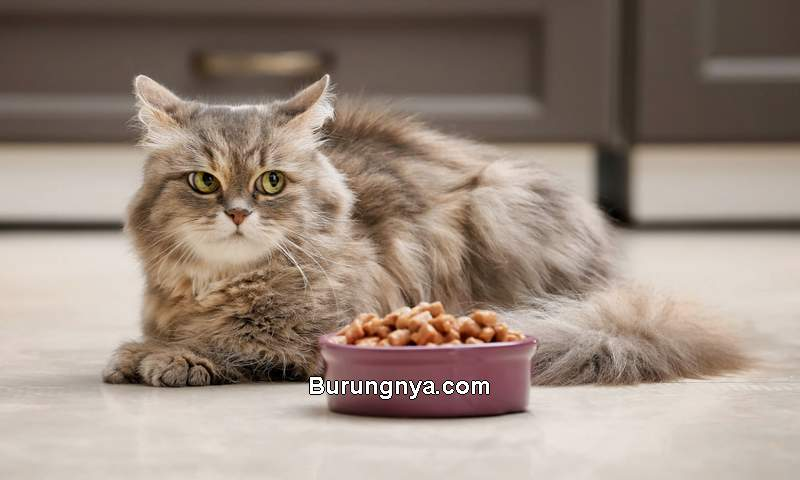 Kucing Tidak Mau Makan (dailypaws.com)