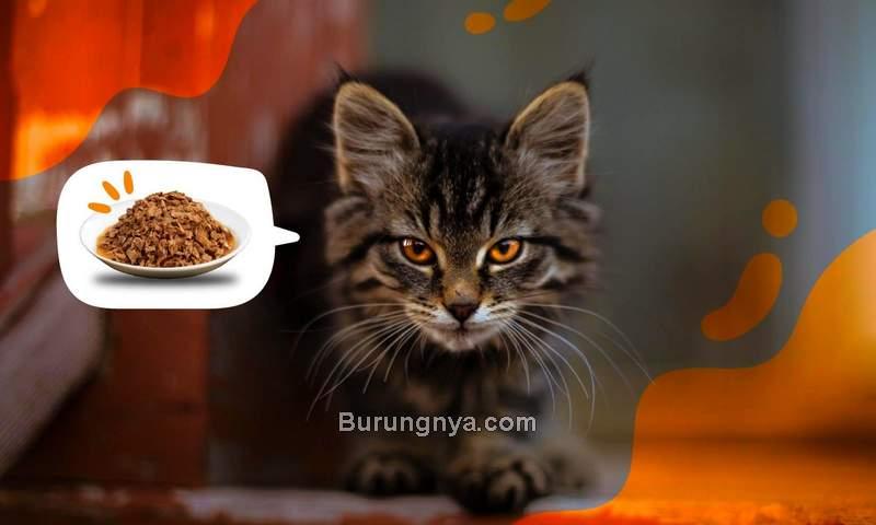 Makanan Kucing Terbaik dan Bergizi (petpedia.co)