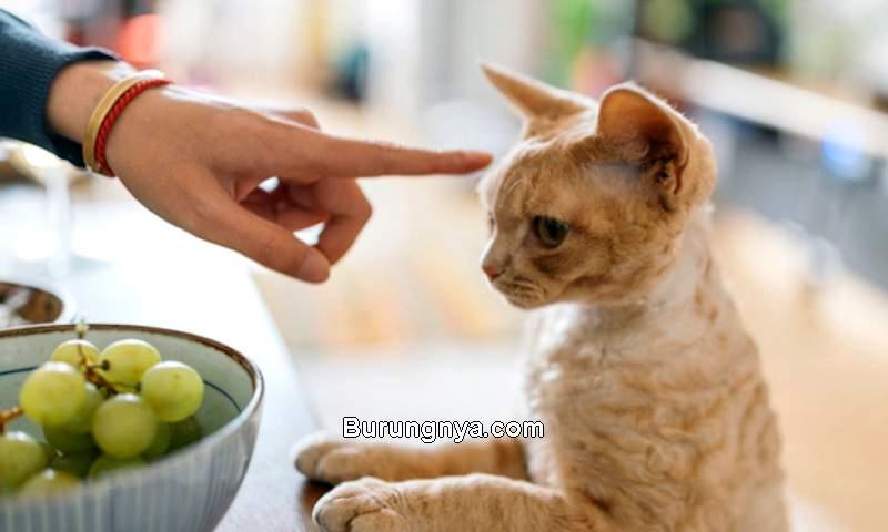 Makanan yang Baik dan Tidak Baik untuk Kucing (cattime.com)