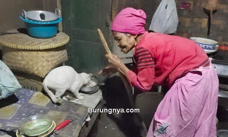 Nenek Hidup Sendiri Ditemani Kucing (kitabisa.com)