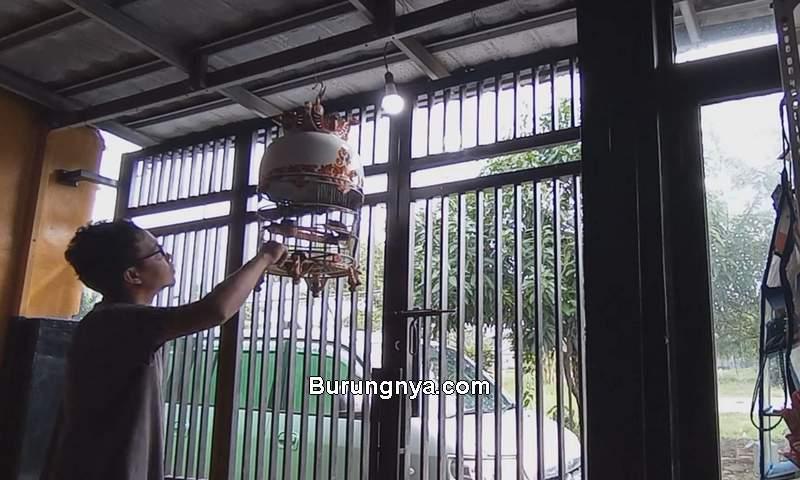 Perkutut Bunyi Gacor dengan Cetekan Jari Jempol (youtube.com)