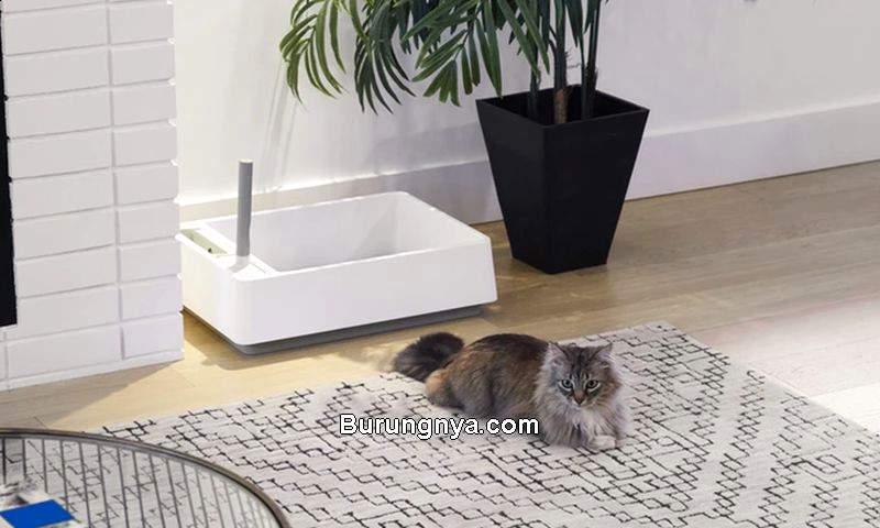 Tempat Meletakkan Litter Box (homecrux.com)