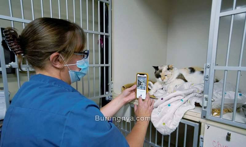 Aplikasi Tably Untuk Mengetahui Kondisi Kucing Bahagia atau Sakit (reuters.com-Korol)