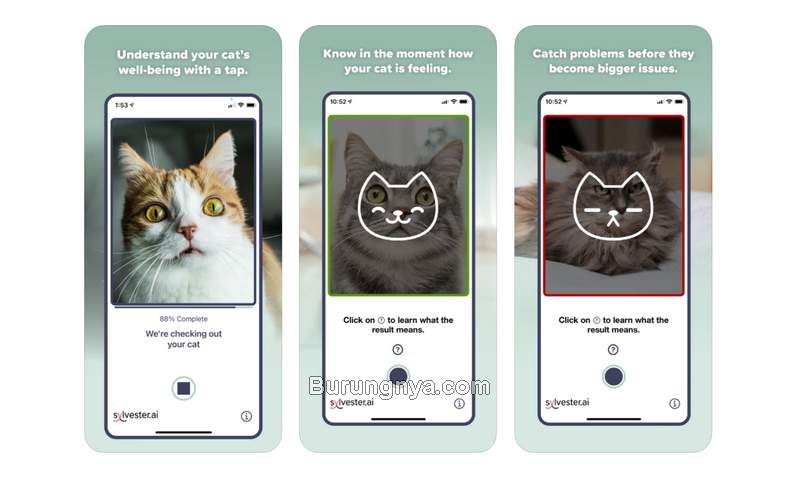 Aplikasi Untuk Mengetahui Kucing Sakit dari Foto Wajah (apple.com)