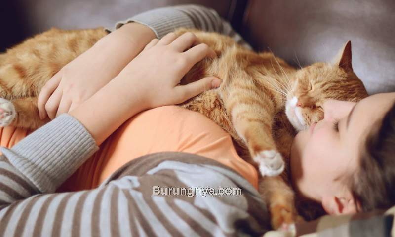 Bahaya Tidur Bersama Kucing di Kamar (chewy.com)
