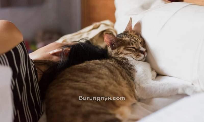 Bahaya Tidur dengan Kucing (coleandmarmalade.com)