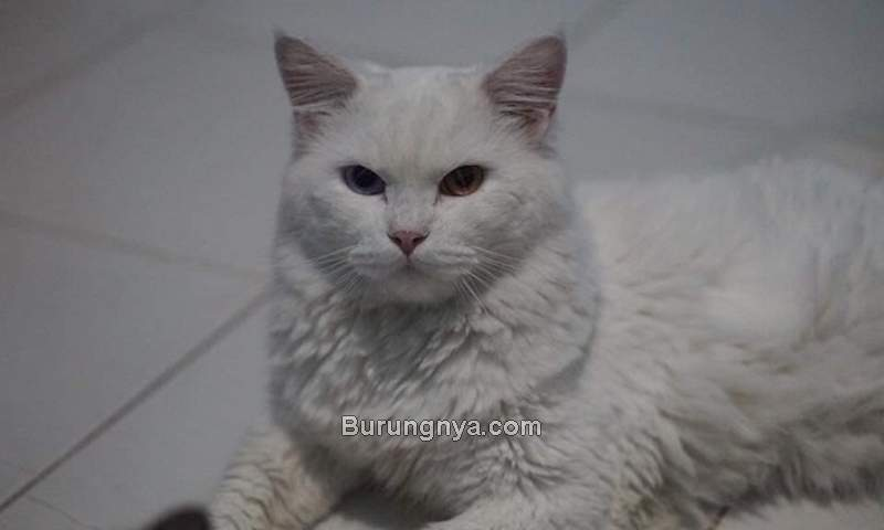 Biaya Memelihara Kucing (quora.com)