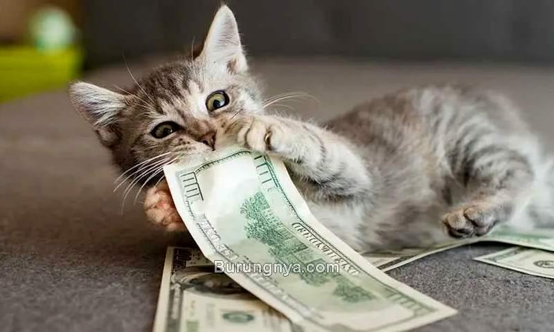 Biaya Merawat Kucing (alphapaw.com)