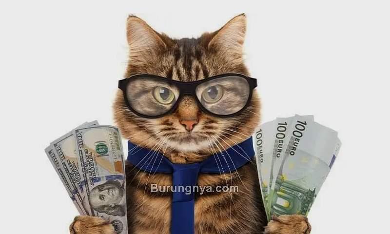 Biaya Pelihara Kucing (alphapaw.com)