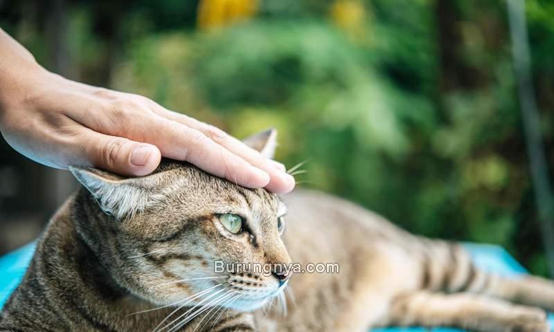 Cara Membuat Kucing Jinak (vecteezy.com)
