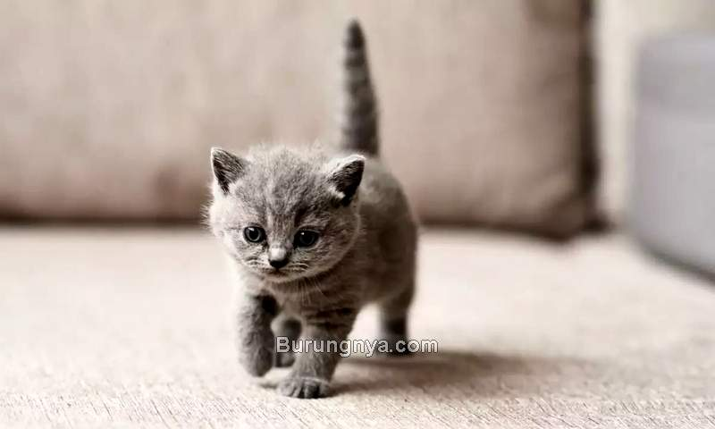 Cara Menjinakkan Anak Kucing (indiatimes.com)