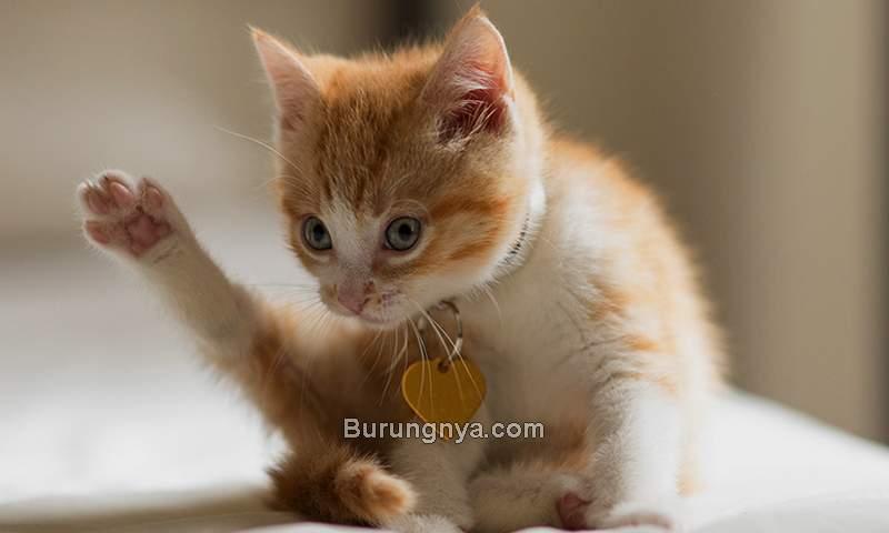 Cara Menjinakkan Kucing Biar Nurut dan Dipanggil Datang (aspca.org)