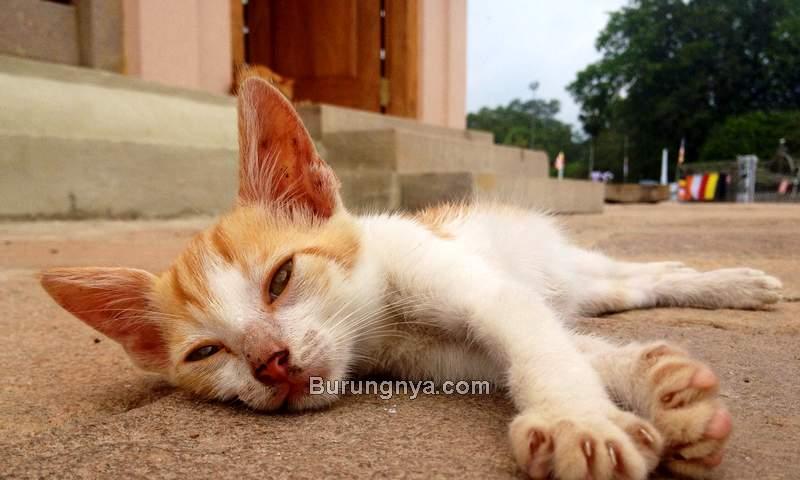 Ciri Kucing Keracunan dan Cara Mengobati (granalacantadvertiser.com)