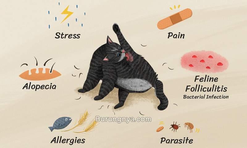 Penyebab Bulu Kucing Rontok (thesprucepets.com)