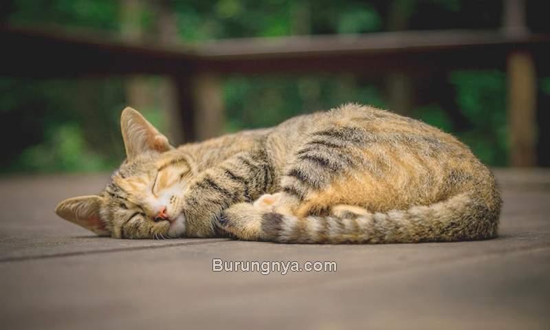Arti Posisi Tidur Kucing (litter-robot.com)