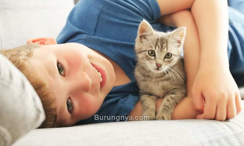 Bahaya Bulu Kucing bagi Kesehatan (romper.com)