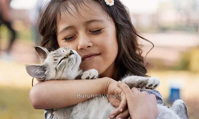 Bahaya Bulu Kucing (bhg.com)