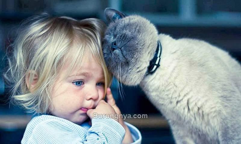 Bahaya Bulu Kucing pada Anak (boredpanda.com)