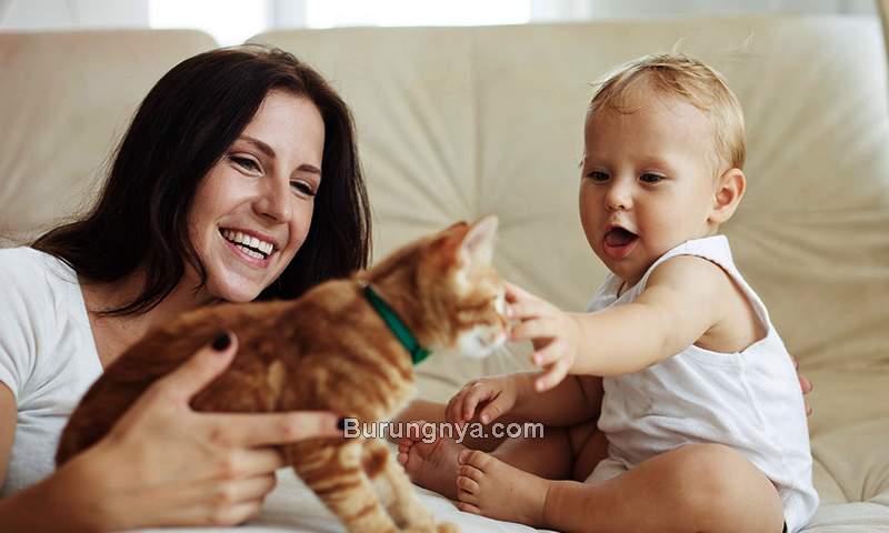 Bahaya Bulu Kucing pada Keluarga (firstcry.com)