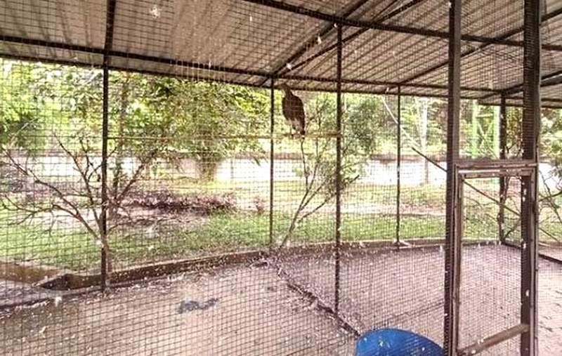 Burung Elang di Taman Burung Siak (suara.com)