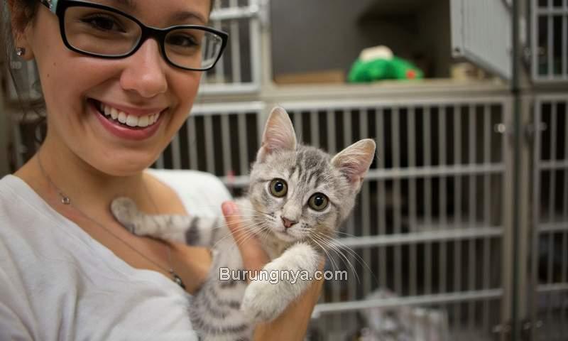 Cara Beli Kucing Import dari Luar Negeri (phillypaws.org)